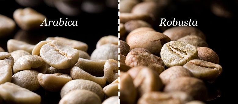café arábica - café robusta